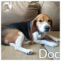 Adopt A Pet :: Doc - Pittsburgh, PA