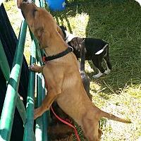 Adopt A Pet :: Matilda - Ogden, UT