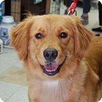 Adopt A Pet :: Lexi - Brooklyn, NY