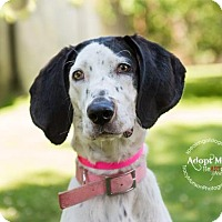 Adopt A Pet :: Indigo - Toronto, ON