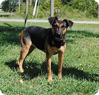 German Shepherd Dog Mix Dog for adoption in Parsons, Kansas - Sheba