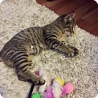 Adopt A Pet :: MissyCP - Carlisle, PA