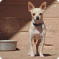 Adopt A Pet :: Lucky - Las Cruces, NM