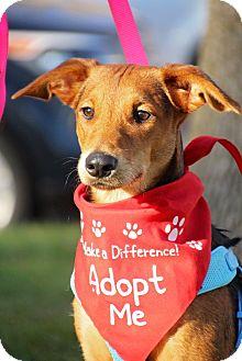 German Shepherd Dog Mix Puppy for adoption in Fort Atkinson, Wisconsin - Diesel