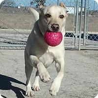 Adopt A Pet :: Louie - Seguin, TX