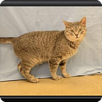 Adopt A Pet :: Ruger - Wooster, OH