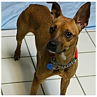 Adopt A Pet :: Lucille - Forked River, NJ
