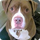 Adopt A Pet :: Marley *URGT* IMMED FOSTER HOME NEEDED