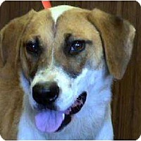 Collie Mix Dog for adoption in Tyler, Texas - AA-Whitney