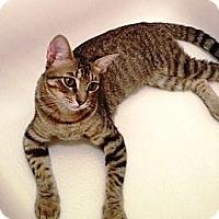 Adopt A Pet :: Charly - Houston, TX