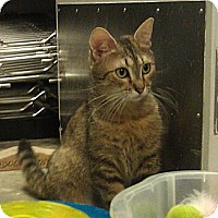 Adopt A Pet :: Doodle - Greenville, SC