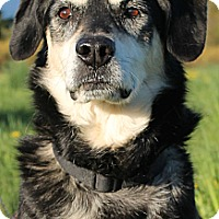 Adopt A Pet :: NIKA~ADOPTED! - North Vancouver, BC