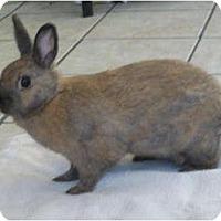 Adopt A Pet :: Shadow - Williston, FL
