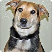 Adopt A Pet :: Poppy - Port Washington, NY