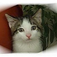 Adopt A Pet :: Destiny - Montgomery, IL