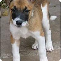 Adopt A Pet :: Pelee ADOPTION PENDING - Phoenix, AZ