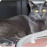 Adopt A Pet :: Smokey - New Port Richey, FL
