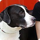 Adopt A Pet :: MARGO easy family gal!