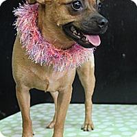 Adopt A Pet :: Zelda - Wytheville, VA