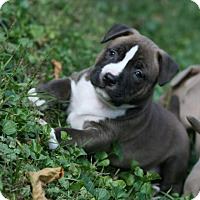 Adopt A Pet :: Ruby - Oak Creek, WI