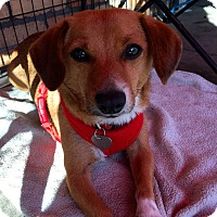 Adopt A Pet :: Chloe - North Hollywood, CA