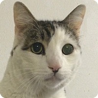 Adopt A Pet :: Bigmac - Winchester, CA