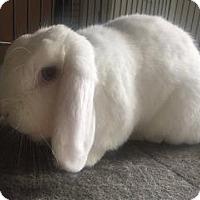 Adopt A Pet :: Buddy - Woburn, MA
