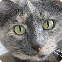 Adopt A Pet :: Chloe - Lincoln, NE