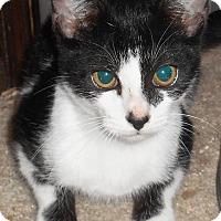 Adopt A Pet :: Elsie - Chattanooga, TN
