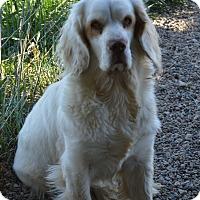 Adopt A Pet :: Beth - Prole, IA