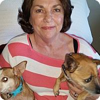 Adopt A Pet :: Chiquita - Plain City, OH