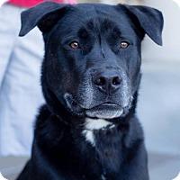 Adopt A Pet :: Thumper - San Diego, CA