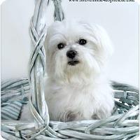 Adopt A Pet :: Huey - Pascagoula, MS
