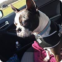 Adopt A Pet :: Tuxedo - Weatherford, TX