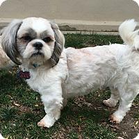 Adopt A Pet :: Chestnut - Fullerton, CA