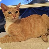 Adopt A Pet :: Skittles - St. Louis, MO