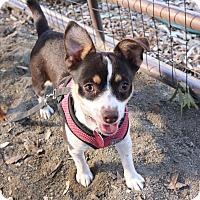 Adopt A Pet :: Jingles - Winters, CA