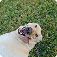 Adopt A Pet :: Bonnie - Lufkin, TX