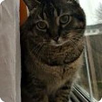Adopt A Pet :: Kayla - McHenry, IL