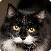 Adopt A Pet :: Sabrina - Scottsdale, AZ