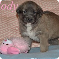 Adopt A Pet :: Melody - Clemmons, NC