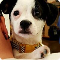 Adopt A Pet :: Simon - Johnson City, TN