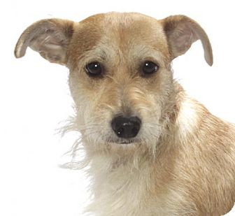 Terrier (Unknown Type, Medium) Dog for adoption in Oakland Park, Florida - North Star