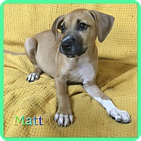 Adopt A Pet :: Matt - Hollywood, FL