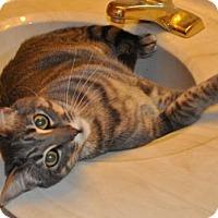Adopt A Pet :: Quinn - O'Fallon, MO