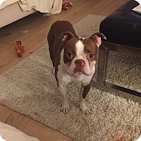 Adopt A Pet :: Finn - San Francisco, CA