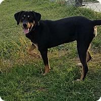 Hound (Unknown Type) Mix Dog for adoption in Manchester, Connecticut - Maddie in CT