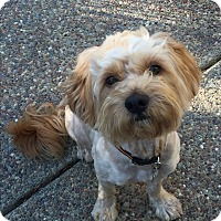 Adopt A Pet :: Marley - adoption pending - Pleasanton, CA
