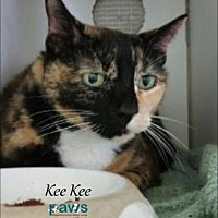 Adopt A Pet :: Kee Kee - Belle Chasse, LA