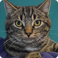 Adopt A Pet :: Flintstone - Visalia, CA